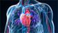 Heart and Vascular