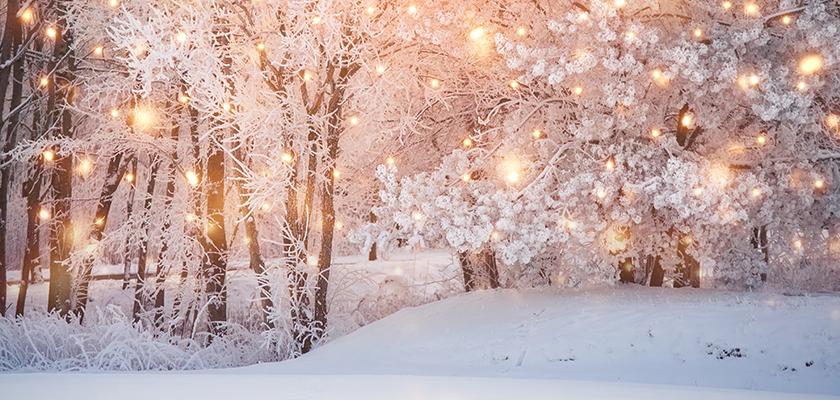 Winter scene in the woods.